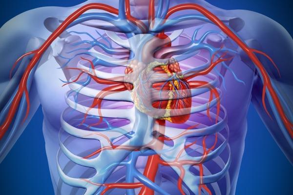 холестерин, уровень холестерина, полезный холестерин, липопротеин высокой плотности