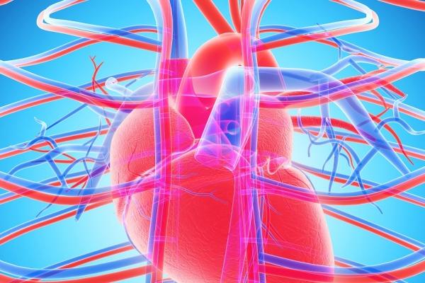 здоровье сердца, здоровье артерий, кальций в артериях