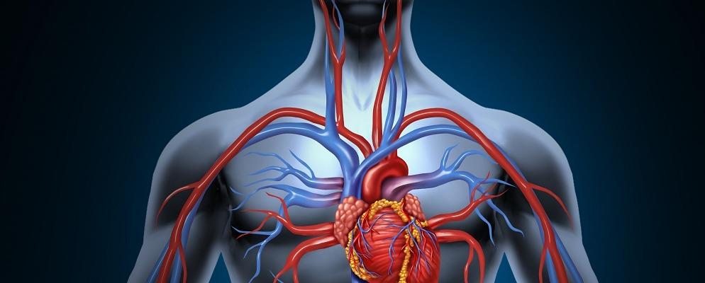 здоровье сердца, сердечная недостаточность