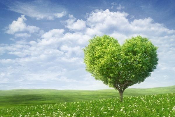медитация, здоровье сердца